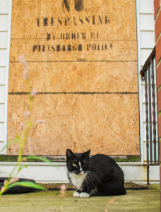 On Norton Street in Mt. Washington, many residents complain of the number of cats at abandoned houses. Photo by Chris Squier | Point Park News Service